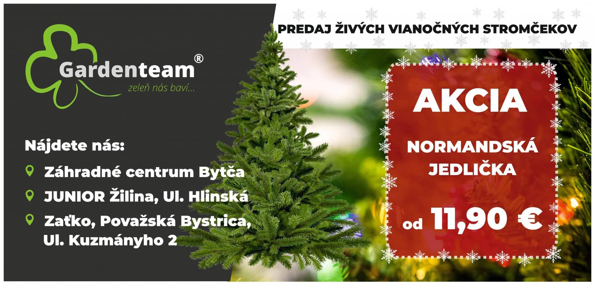 Vianočný stromček 2020 Normandská jedlička
