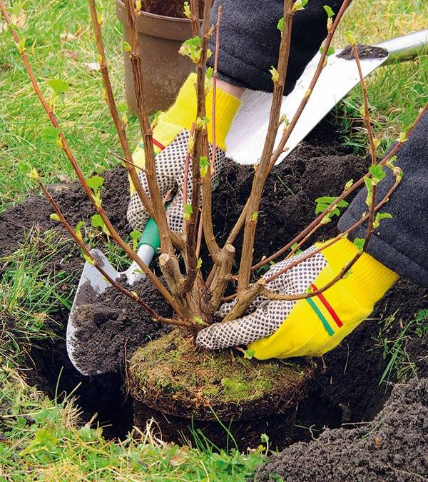 Sadenie ovocných stromov jednoducho a prehľadne