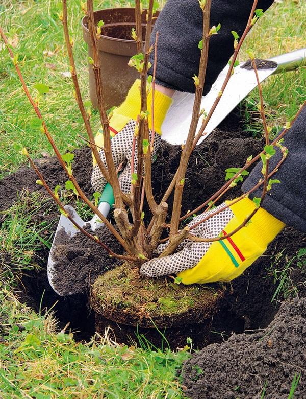Výsadba stromčekov