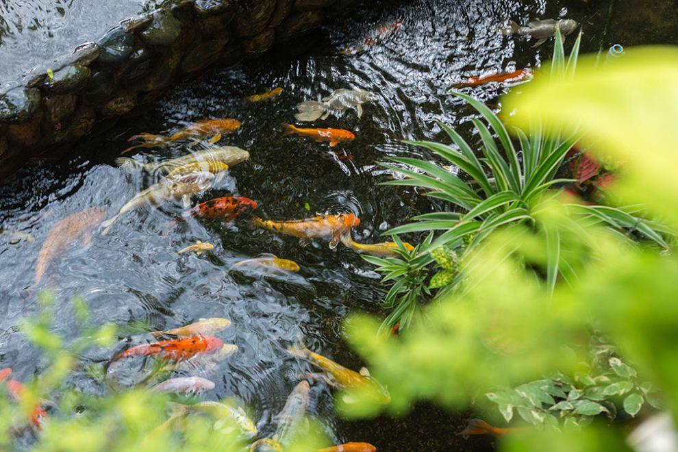 Ako správne naštartovať záhradné jazierka?