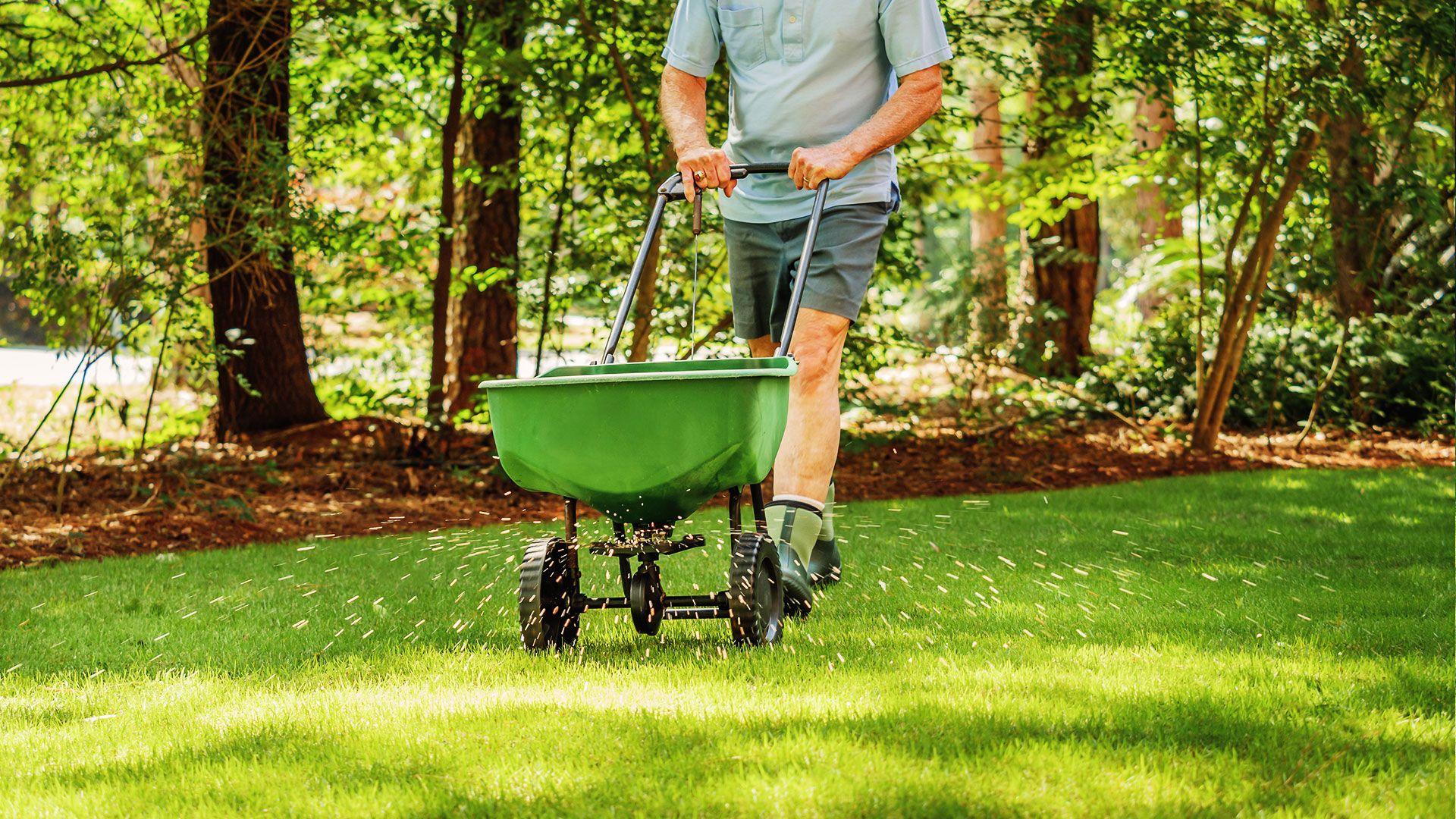 hnojenie trávnika rozmetačom