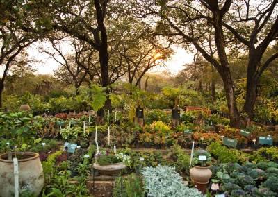 Záhrada permakultúra