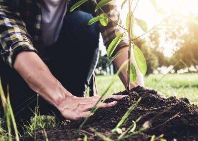 sadenie stromov