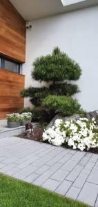 Bonsai pri dome