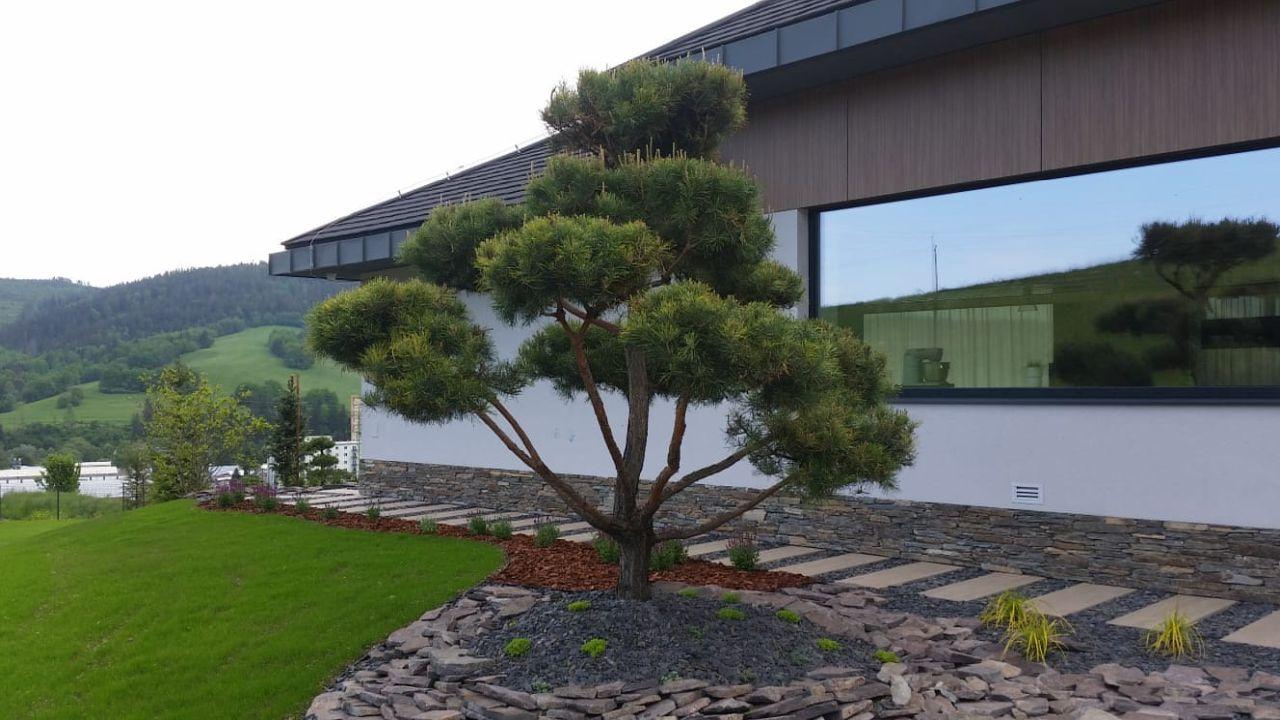 Bonsai v záhrade