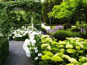 Hortenzie biele a zelené