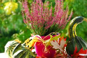 Vresy v kvetináči
